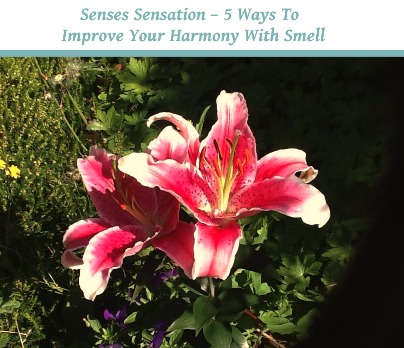 Senses Sensation – 5 Ways To Improve Your Harmony With Smell