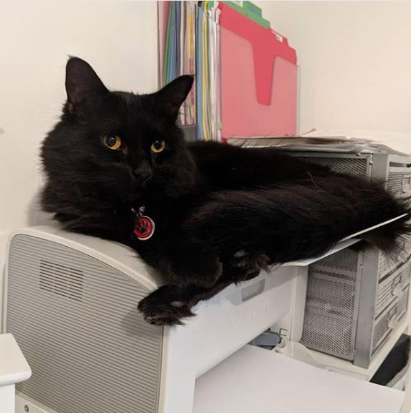 Bast on Printer